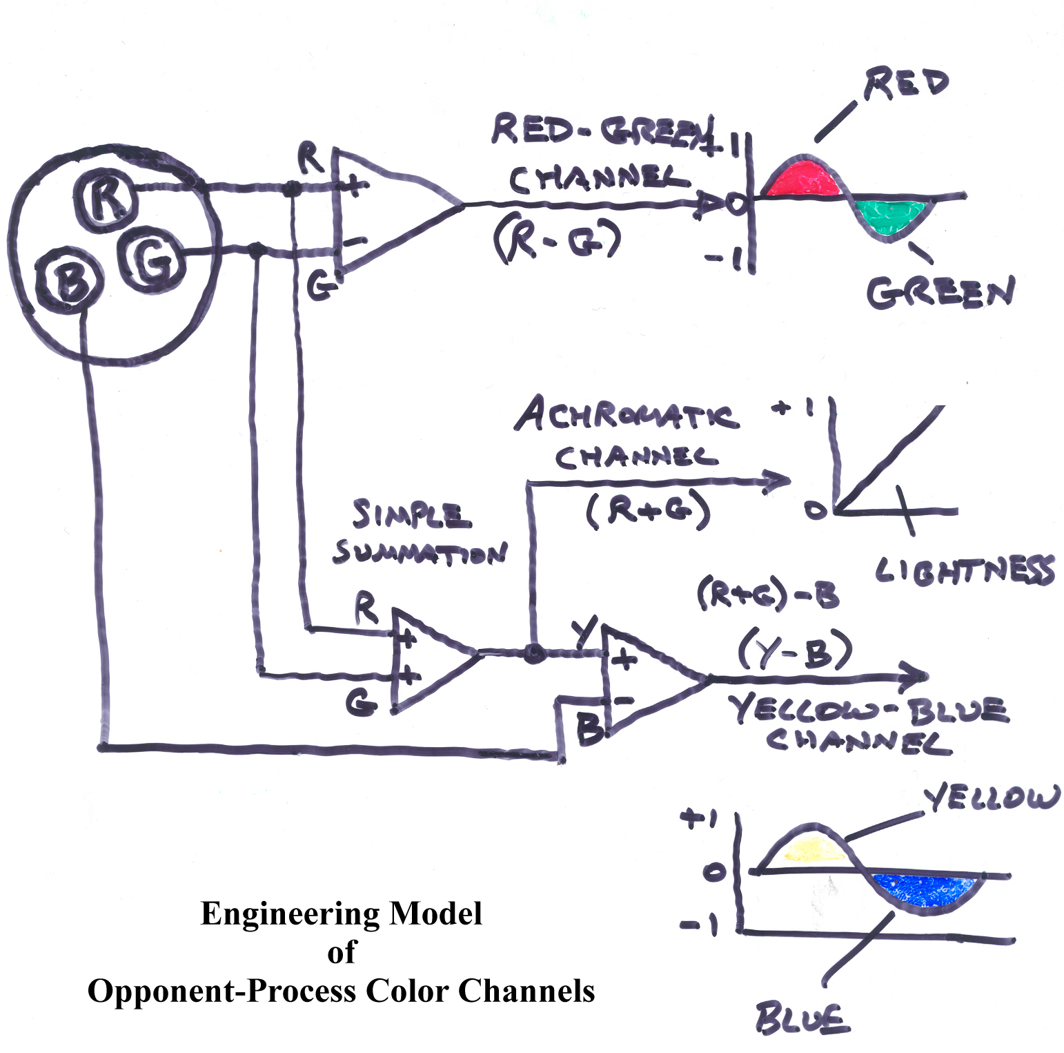 opponent process theory What are the differences between the trichromatic theory or color vision and the opponent-process theory of color vision.